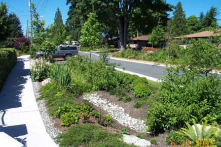 Sustainable Street Design For 115th With Sidewalk And