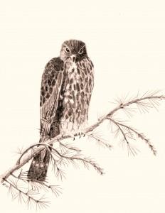 Merlin Drawing