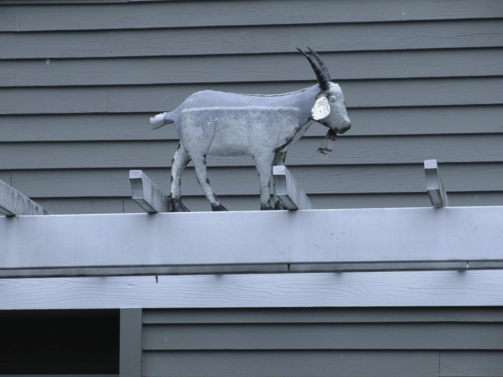 Goat12thAveNE&NE113thSt